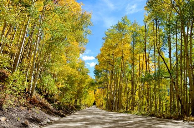 Boreas Pass Road 873